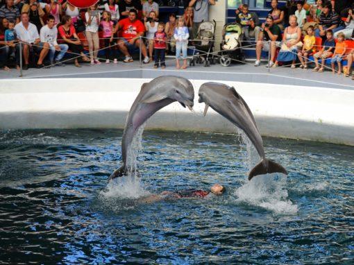 Варна – Дельфинарий