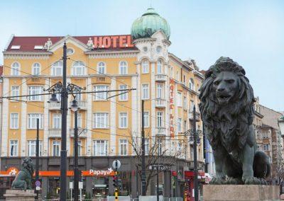 Lion Sofia 03