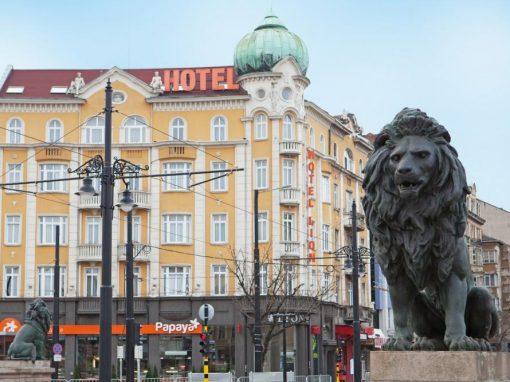 Lion Sofia